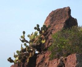 arbolitoscactus